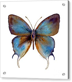 48 Manto Hypoleuca Butterfly Acrylic Print by Amy Kirkpatrick