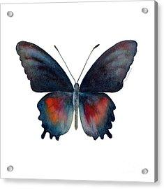 49 Parides Orellana Butterfly Acrylic Print by Amy Kirkpatrick
