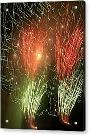 4th Of July Acrylic Print by Tammy McDougall