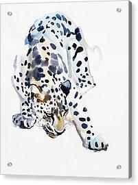 Arabian Leopard Acrylic Print by Mark Adlington