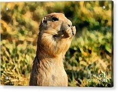 Black-tailed Prairie Dog Acrylic Print by George Atsametakis