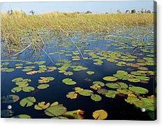Botswana, Okavango Delta Acrylic Print