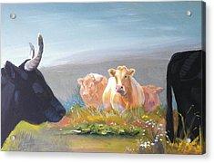 Cows Acrylic Print