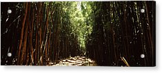 Dirt Road Passing Through A Forest Acrylic Print