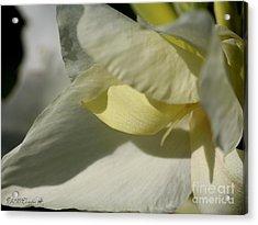 Dwarf Canna Lily Named Ermine Acrylic Print by J McCombie