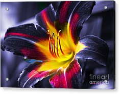 Flower Burst Acrylic Print by Gunter Nezhoda