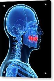Human Teeth Acrylic Print by Sebastian Kaulitzki