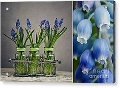 Hyacinth Still Life Acrylic Print by Nailia Schwarz