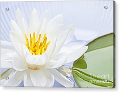 Lotus Flower Acrylic Print by Elena Elisseeva
