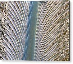 Penguin Feather Acrylic Print