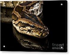 Acrylic Print featuring the photograph Snake by Gunnar Orn Arnason