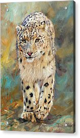 Snow Leopard Acrylic Print by David Stribbling