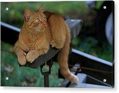 5-toe'd Orange Cat Of The Marina Acrylic Print