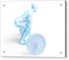 Weight Training Posture Acrylic Print by Sebastian Kaulitzki