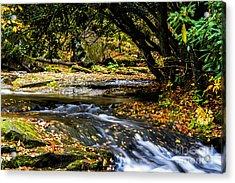 Williams River Headwaters Acrylic Print by Thomas R Fletcher