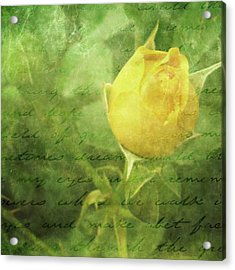 Yellow Rose Acrylic Print by Cathie Tyler