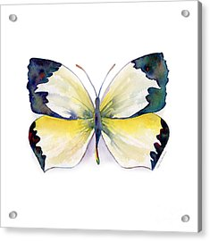 55 Mexican Yellow Butterfly Acrylic Print by Amy Kirkpatrick