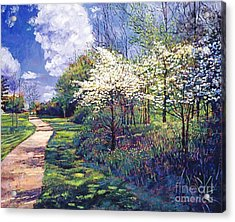 Dogwood Trees In Bloom Acrylic Print
