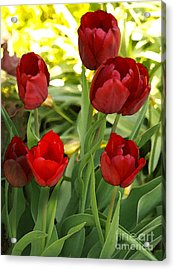 Acrylic Print featuring the photograph 5tulips by Susan Crossman Buscho