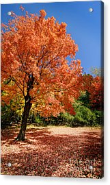 A Blanket Of Fall Colors Acrylic Print by Amy Cicconi