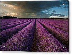 Beautiful Lavender Field Landscape With Dramatic Sky Acrylic Print by Matthew Gibson