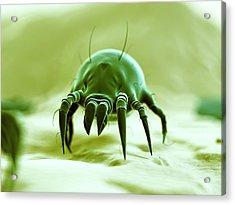Dust Mite Acrylic Print by Sebastian Kaulitzki
