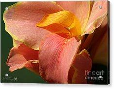 Dwarf Canna Lily Named Corsica Acrylic Print by J McCombie