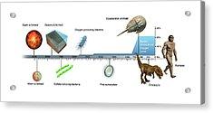 Evolution Of Earth Timeline Acrylic Print