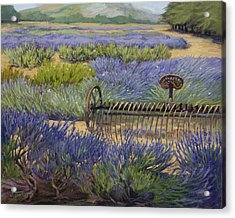 Edge Of The Lavender Field Acrylic Print