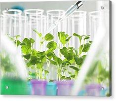 Plant Biotechnology Acrylic Print