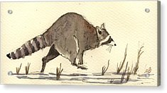 Raccoon  Acrylic Print by Juan  Bosco