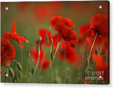 Red Acrylic Print by Nailia Schwarz