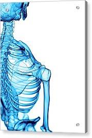 Shoulder Bones Acrylic Print by Sebastian Kaulitzki/science Photo Library