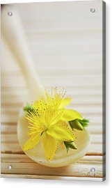 St. Johns Wort (hypericum Perforatum) Acrylic Print by Gustoimages/science Photo Library