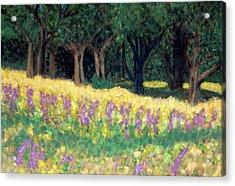 Texas Gold Acrylic Print