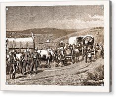 The Revolt In The Transvaal, South Africa Acrylic Print