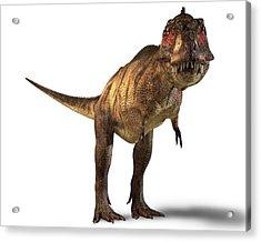 Tyrannosaurus Rex Dinosaur Acrylic Print