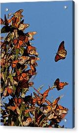 Usa, California, San Luis Obispo County Acrylic Print by Jaynes Gallery
