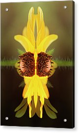Usa, Colorado, Boulder Acrylic Print by Jaynes Gallery