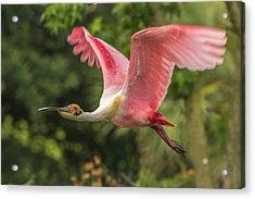 Usa, Louisiana, Jefferson Island Acrylic Print
