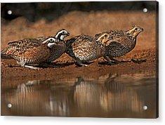 Usa, Texas, Santa Clara Ranch Acrylic Print