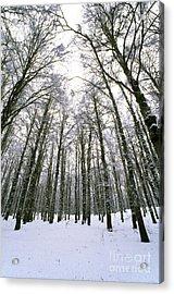 Wintertime In Abruzzo National Park Acrylic Print by George Atsametakis