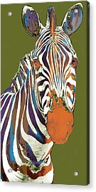 Zebra - Stylised Drawing Art Poster Acrylic Print by Kim Wang
