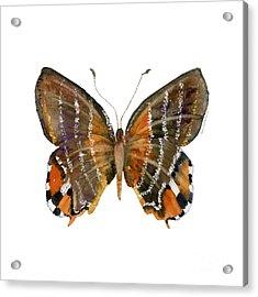 60 Euselasia Butterfly Acrylic Print