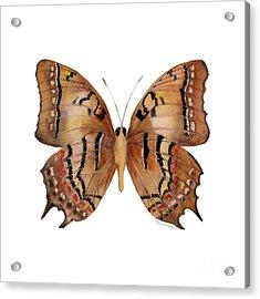 62 Galaxia Butterfly Acrylic Print by Amy Kirkpatrick