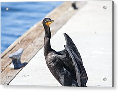 624 Det 7 Come With Me Acrylic Print by Chris Berry