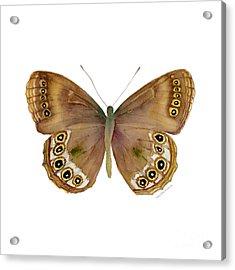64 Woodland Brown Butterfly Acrylic Print by Amy Kirkpatrick