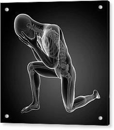 Human Skeletal System Acrylic Print