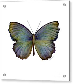 65 Moonglow Butterfly Acrylic Print by Amy Kirkpatrick