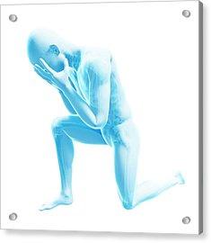 Human Anatomy Acrylic Print by Sebastian Kaulitzki